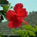 春休みの沖縄